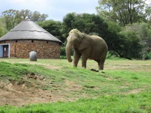 Joburg Zoo 059